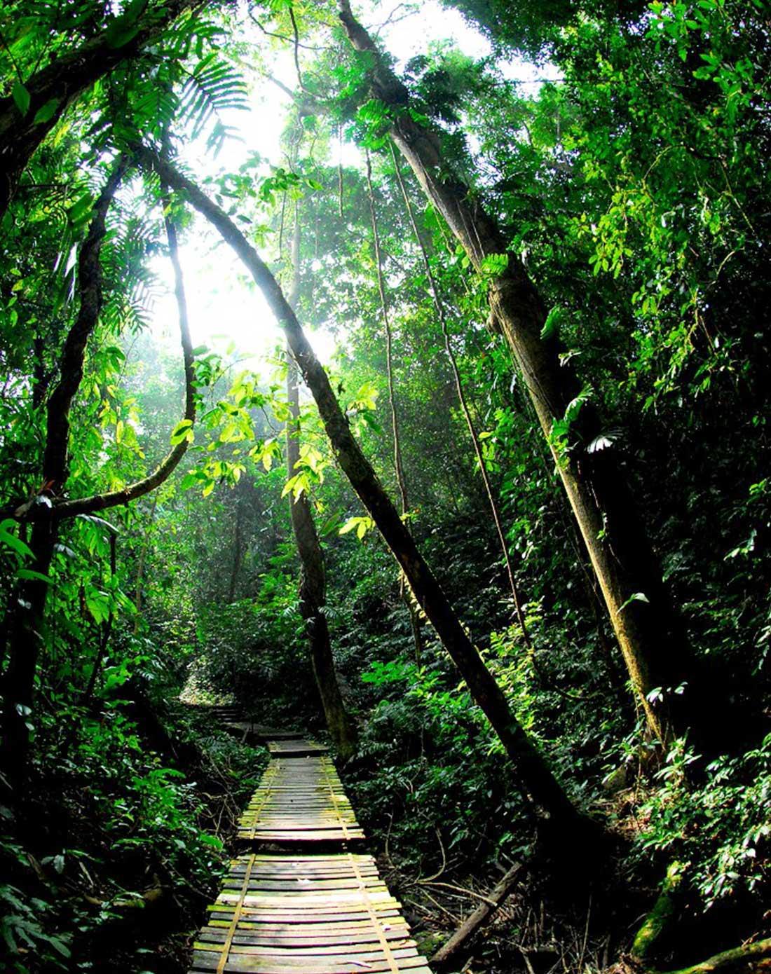 昆明直飞西双版纳,望天树热带雨林,野象谷6天5晚品质游(全程五星酒店