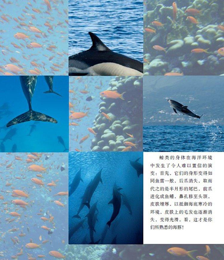 海洋精灵--海豚 动物世界大写真